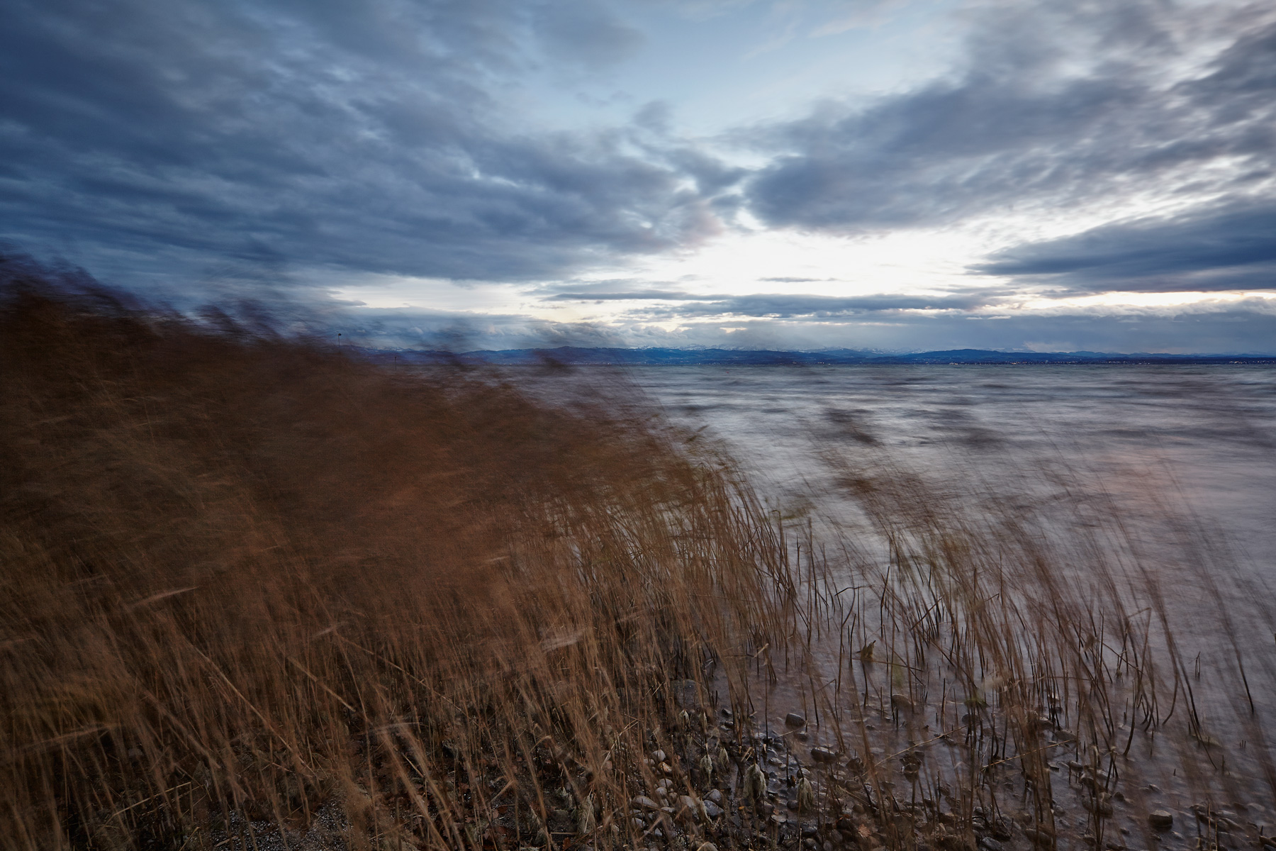 among-the-reeds-1