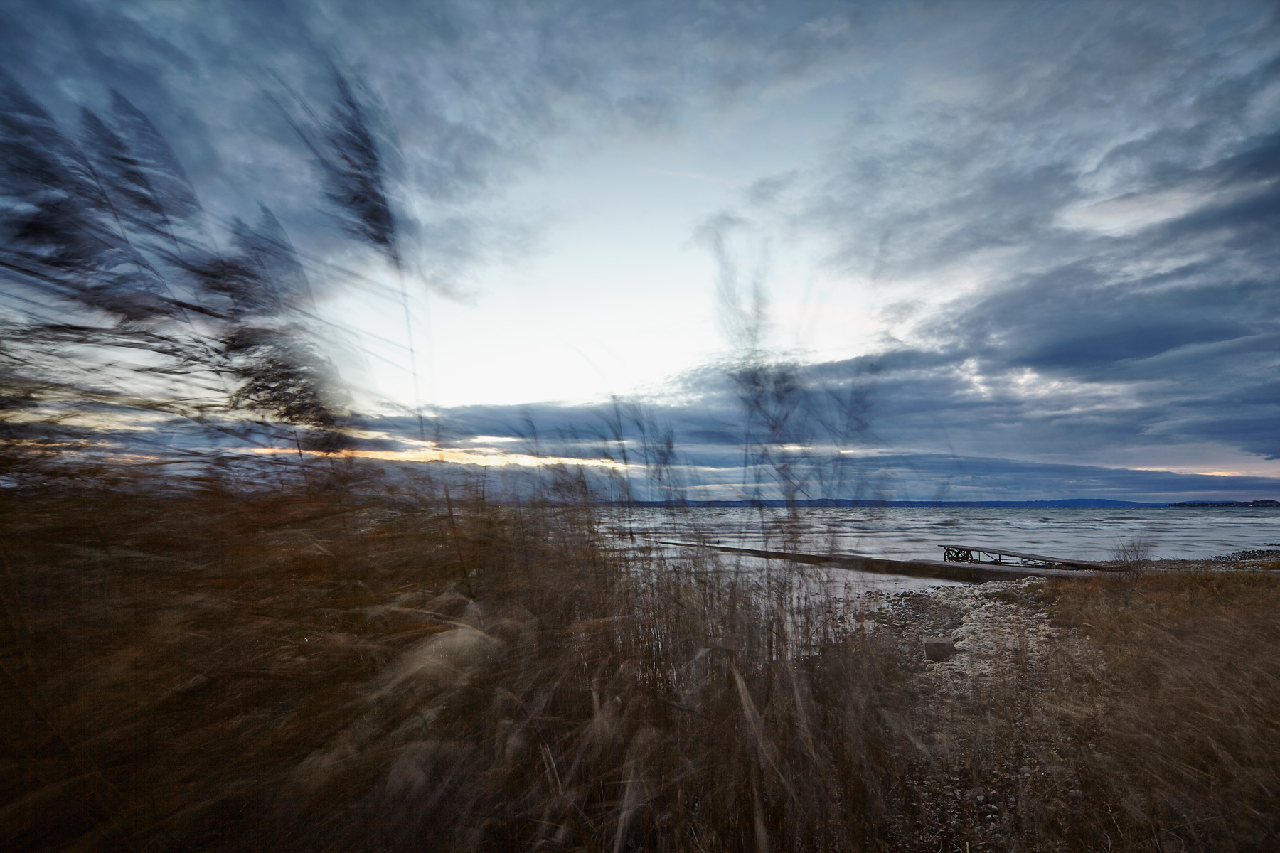among-the-reeds-2