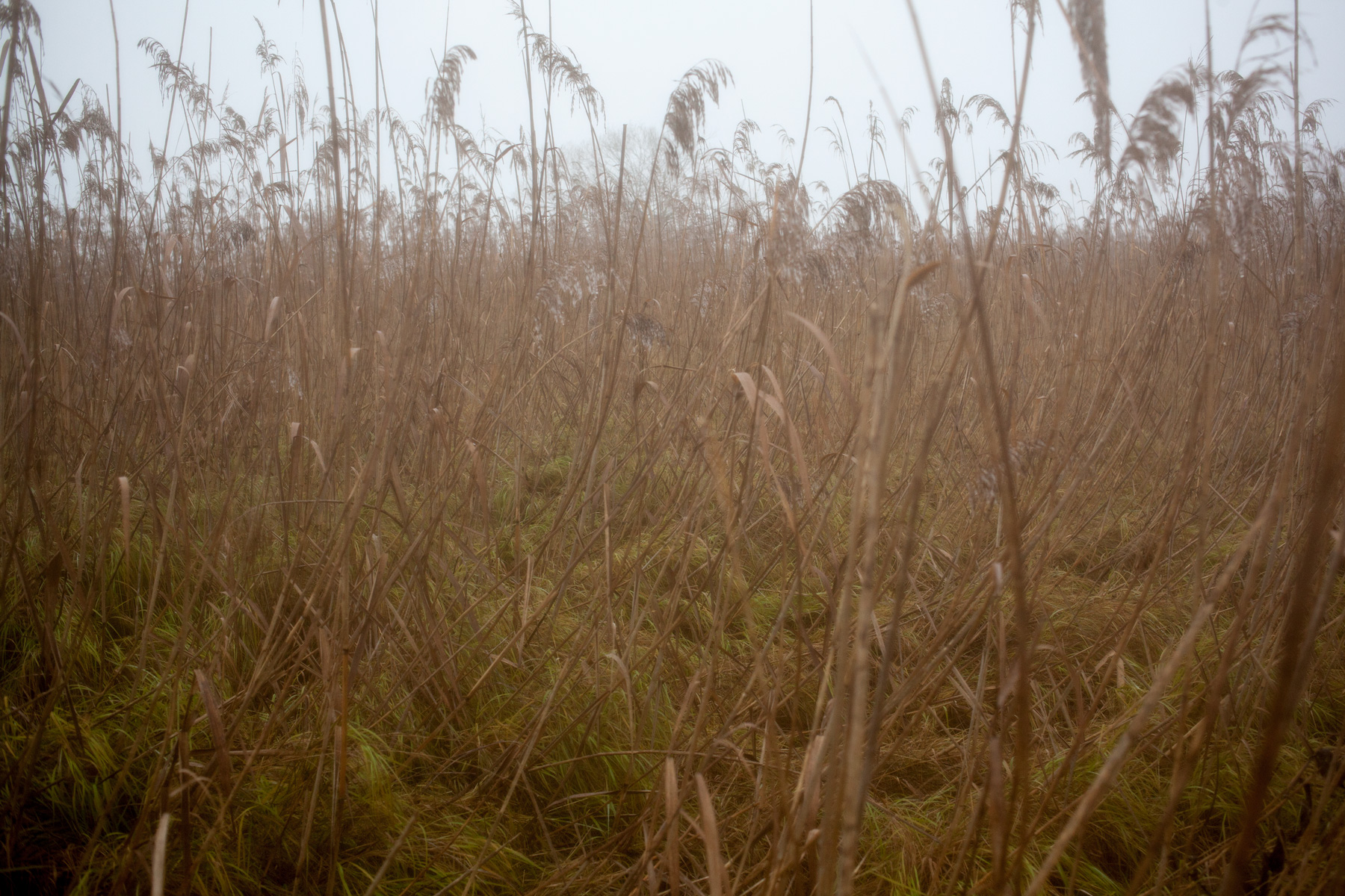 among-the-reeds-3