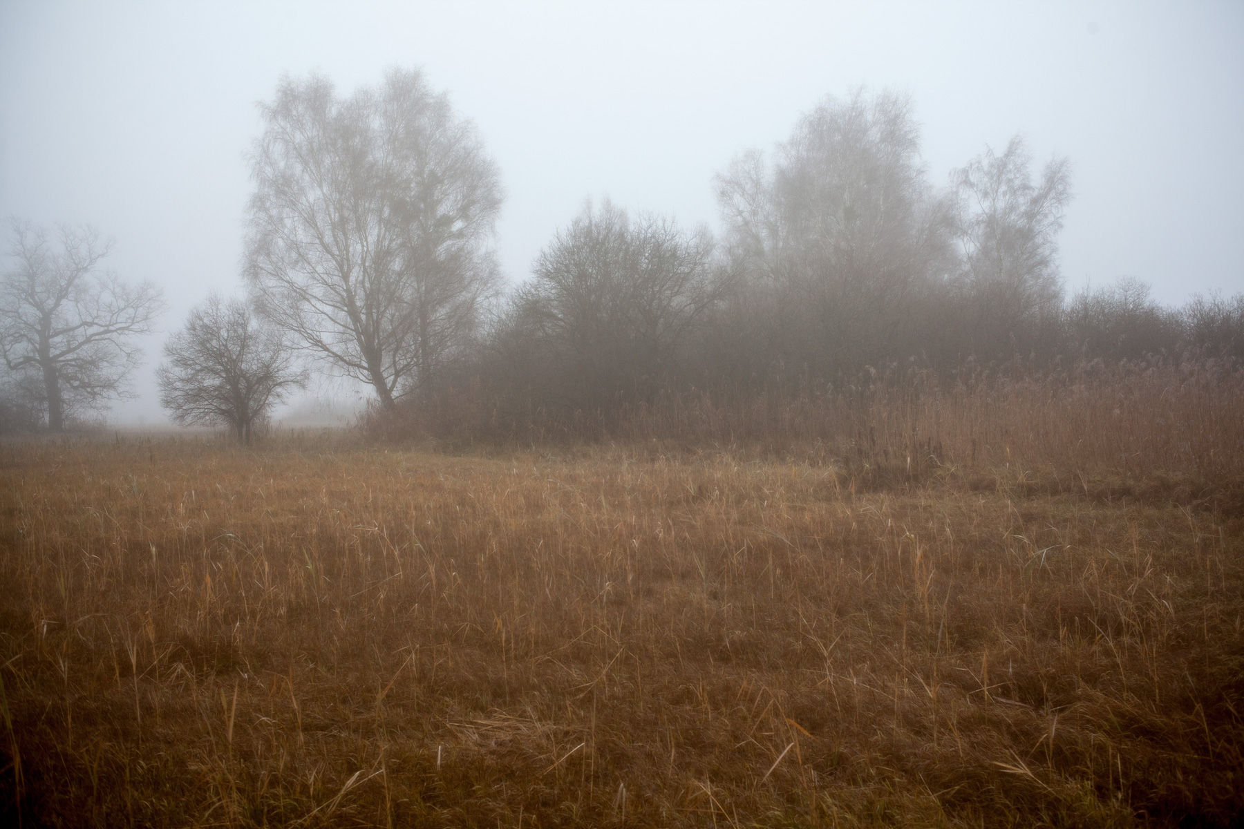 among-the-reeds-4